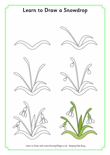 Learn to draw a snowdrop