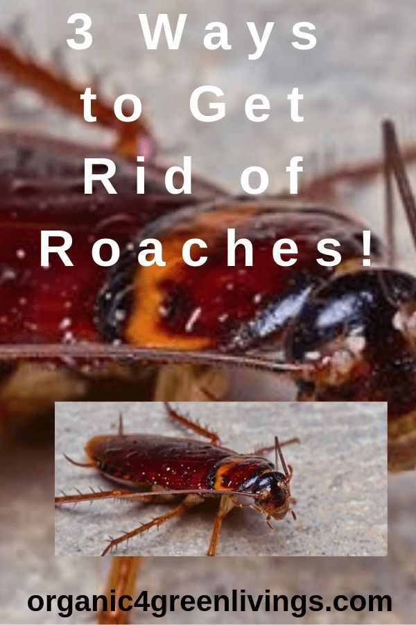 3 Ways To Prevent And Get Rid Of Roaches Healthy Life Happy Life
