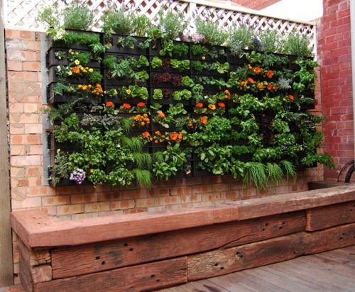 This is a vertical garden with a fishpond below. The water from the fishpond is pumped up to water the plants and the water runs through into the pond. The fish feed the plants and vice versa! Aquaculture!: Gardens Ideas, Small Backyard, Vegetables Gardens, Gardens Wall, Vertical Gardens, Herbs Gardens, Small Gardens, Fish Ponds, Wall Gardens