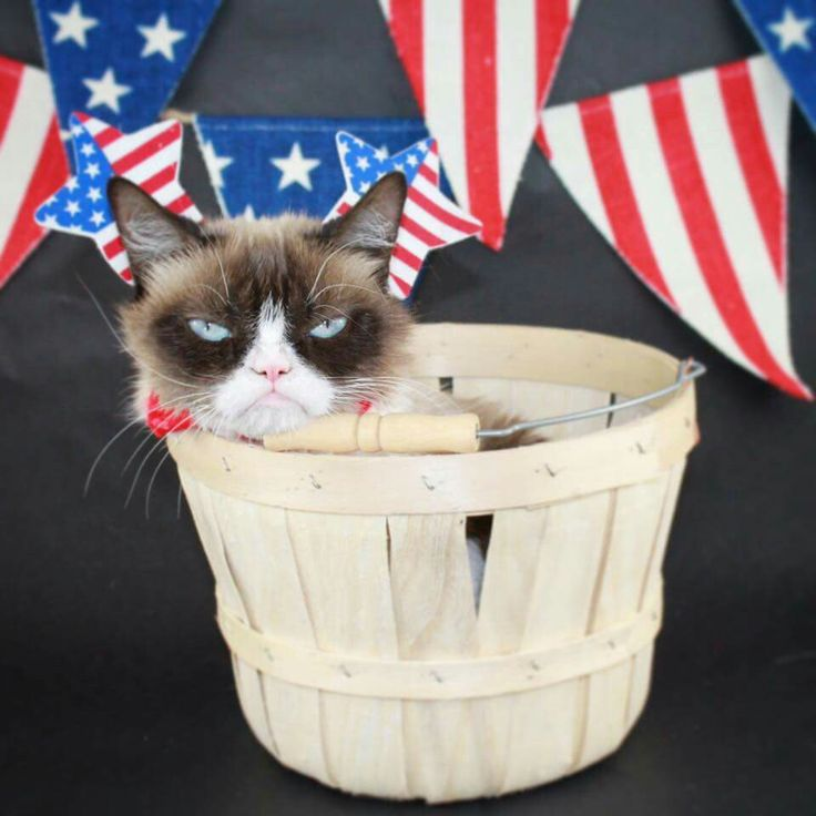 Grumpy Cat Happy Memorial Day Meme