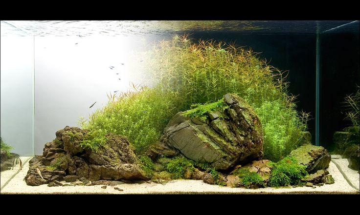 447 best images about aquascaping on pinterest cichlids. Black Bedroom Furniture Sets. Home Design Ideas