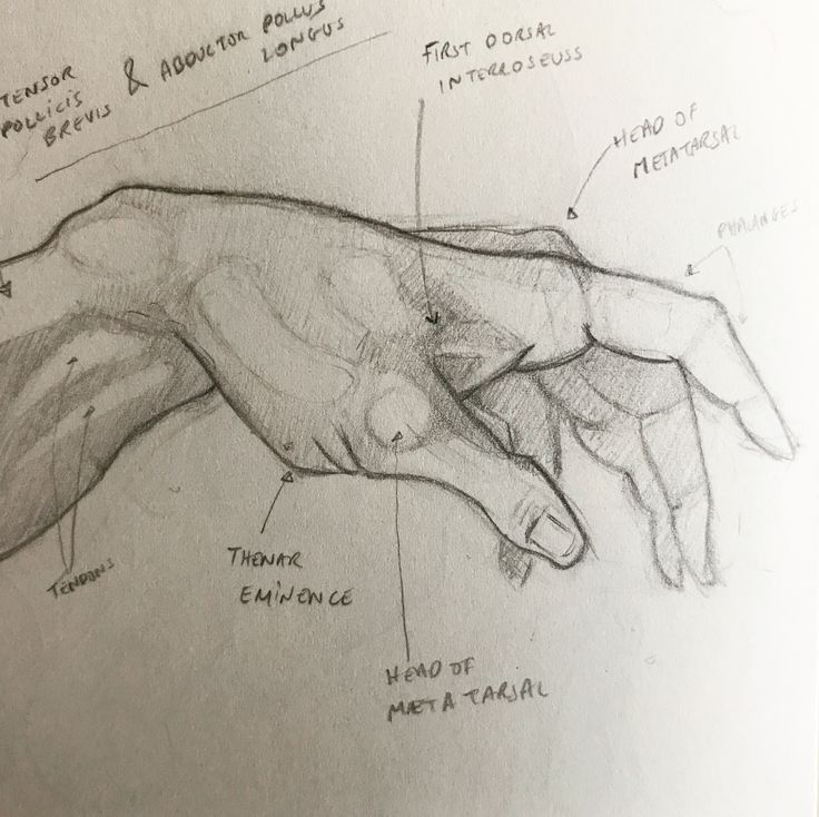 Sinead Lawless - #hand #anatomy #art #sketch #pencil #creationofadam #adam
