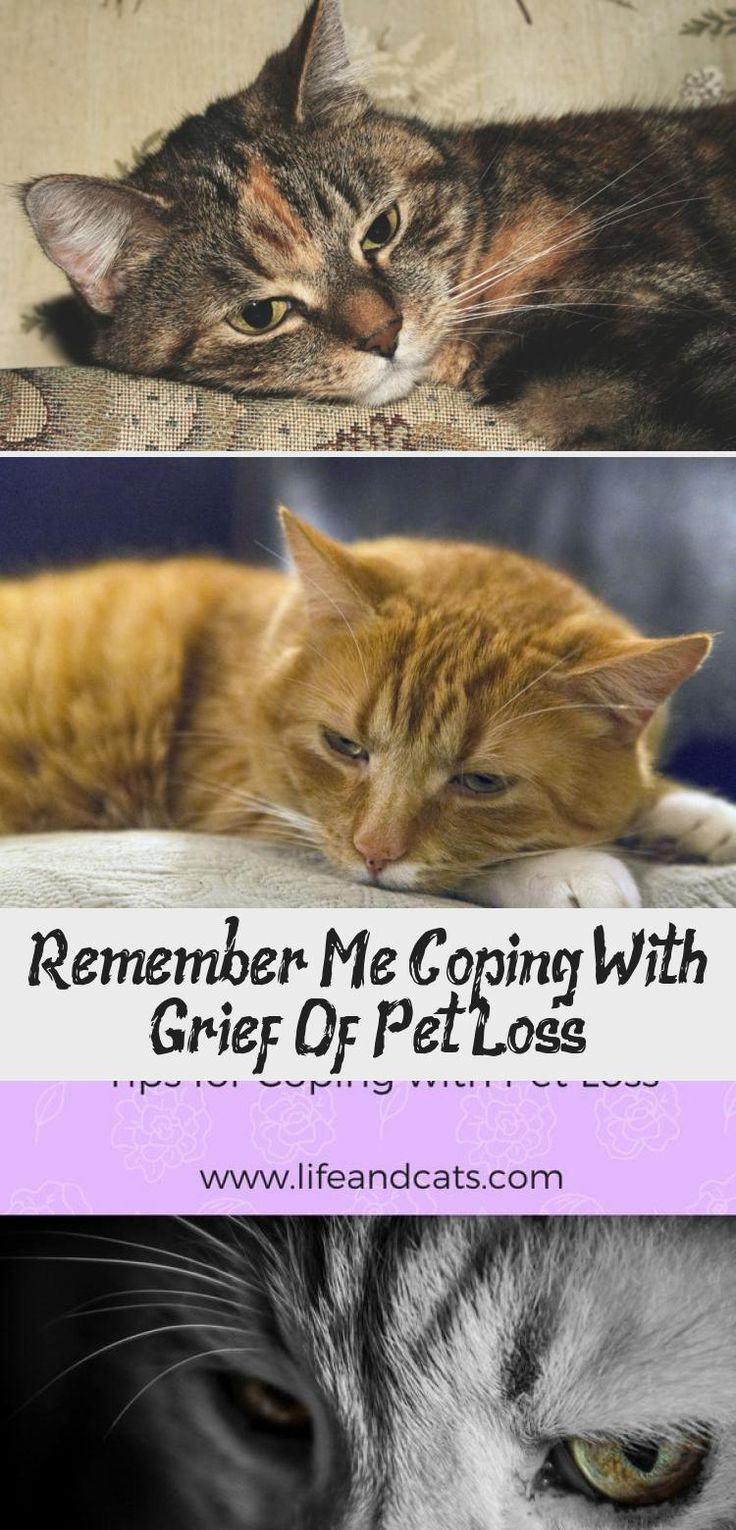 Remember Me Coping With Grief Of Pet Loss in 2020 Pet