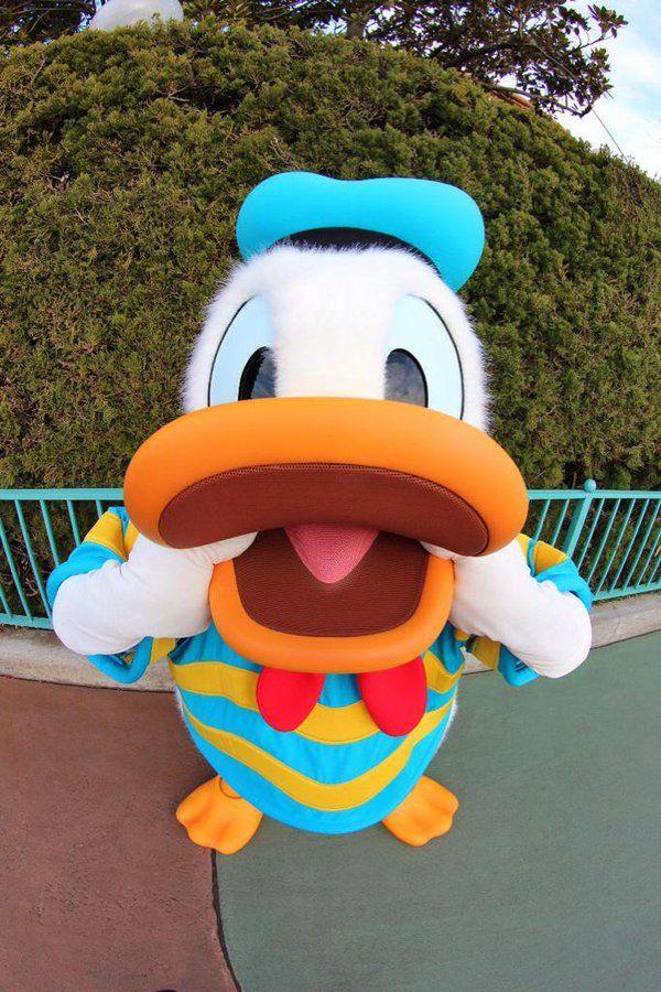 8c631529dbe95594403800d3b5b0ae0d cavities donald duck