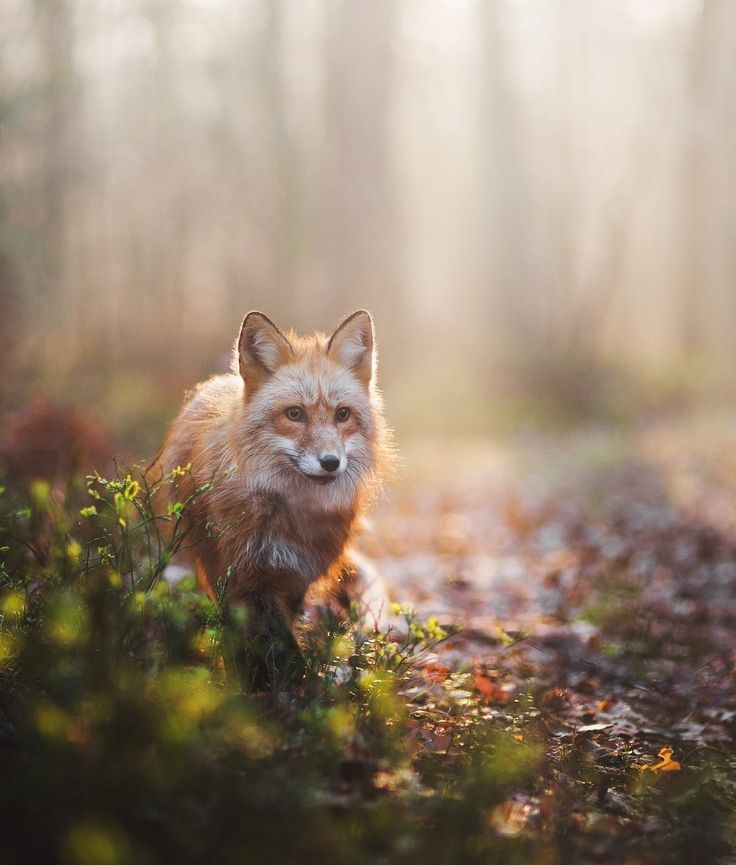 "beautiful-wildlife: ""Morning walk by © Iza Lyson """