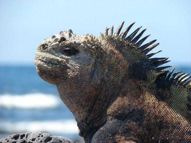 Ecuador, Galapagos, Peru & Bolivia. Adventuredk. Travling. Travel. Nature. Culture.Animals