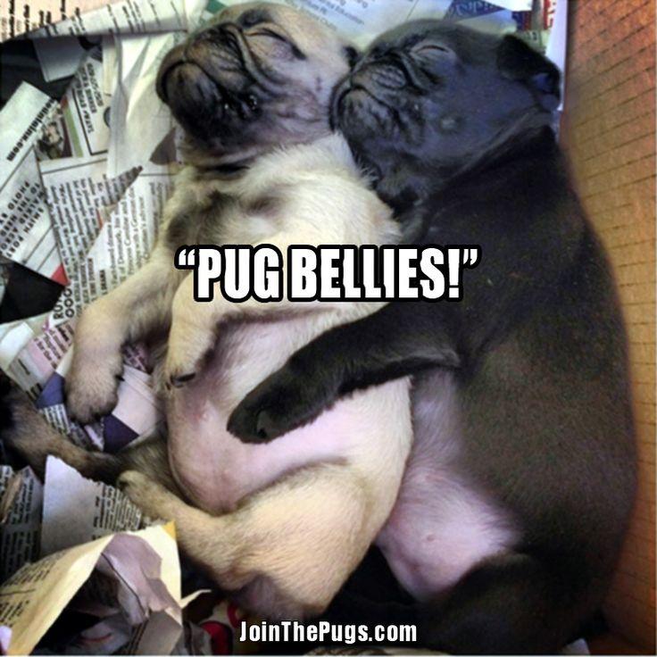 Popular Chubbie Chubby Adorable Dog - 8c644bc7516b6c12e1291b0f2a210b60--baby-pugs-pug-puppies  Collection_399540  .jpg