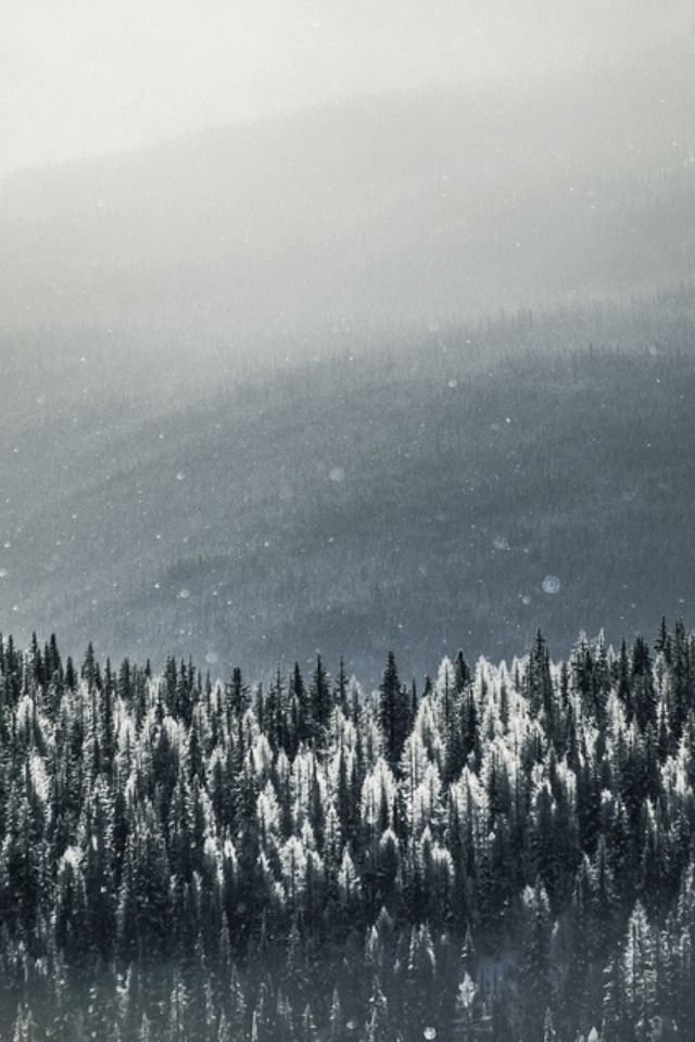 winter snow mountains pine trees forest