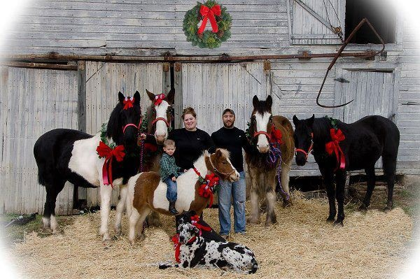 Horse Family Christmas Photo Submitted To Chick S By