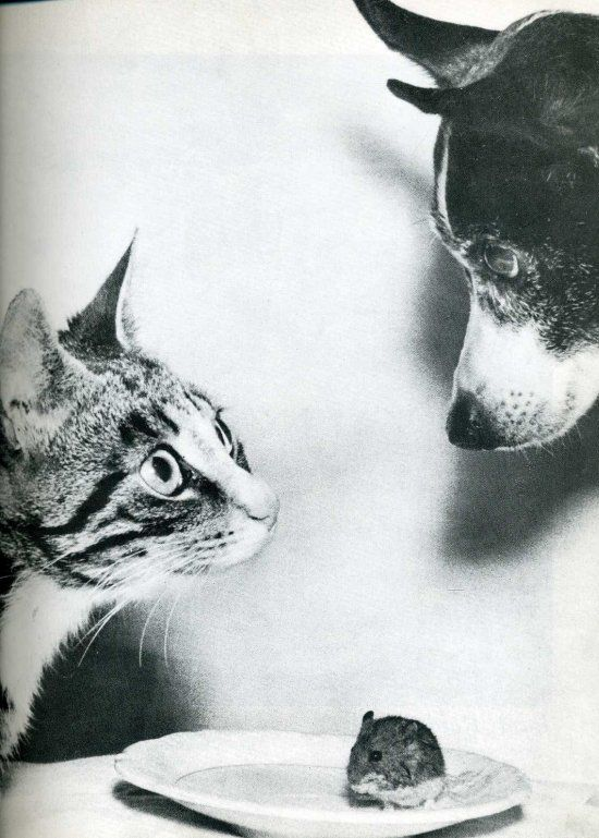 'Cat and Mouse, and Dog, 1955 by Jytte Bjerregaard Muller.