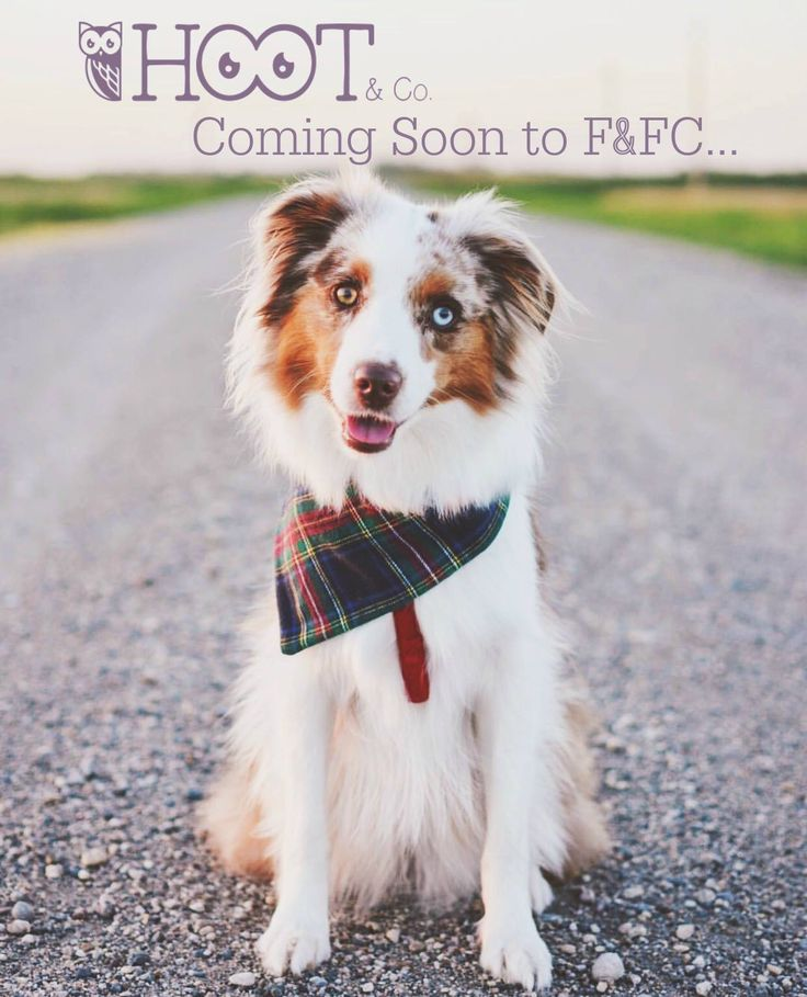 We have very exciting news for you and your fuzzy best friend! Hoot & Co bandanas are coming soon to the Fashion & Farm Country Online Store! Hoot & Co beautiful high equality bandanas are handmade & 100% cotton. Photo by @miniaussie_bryn