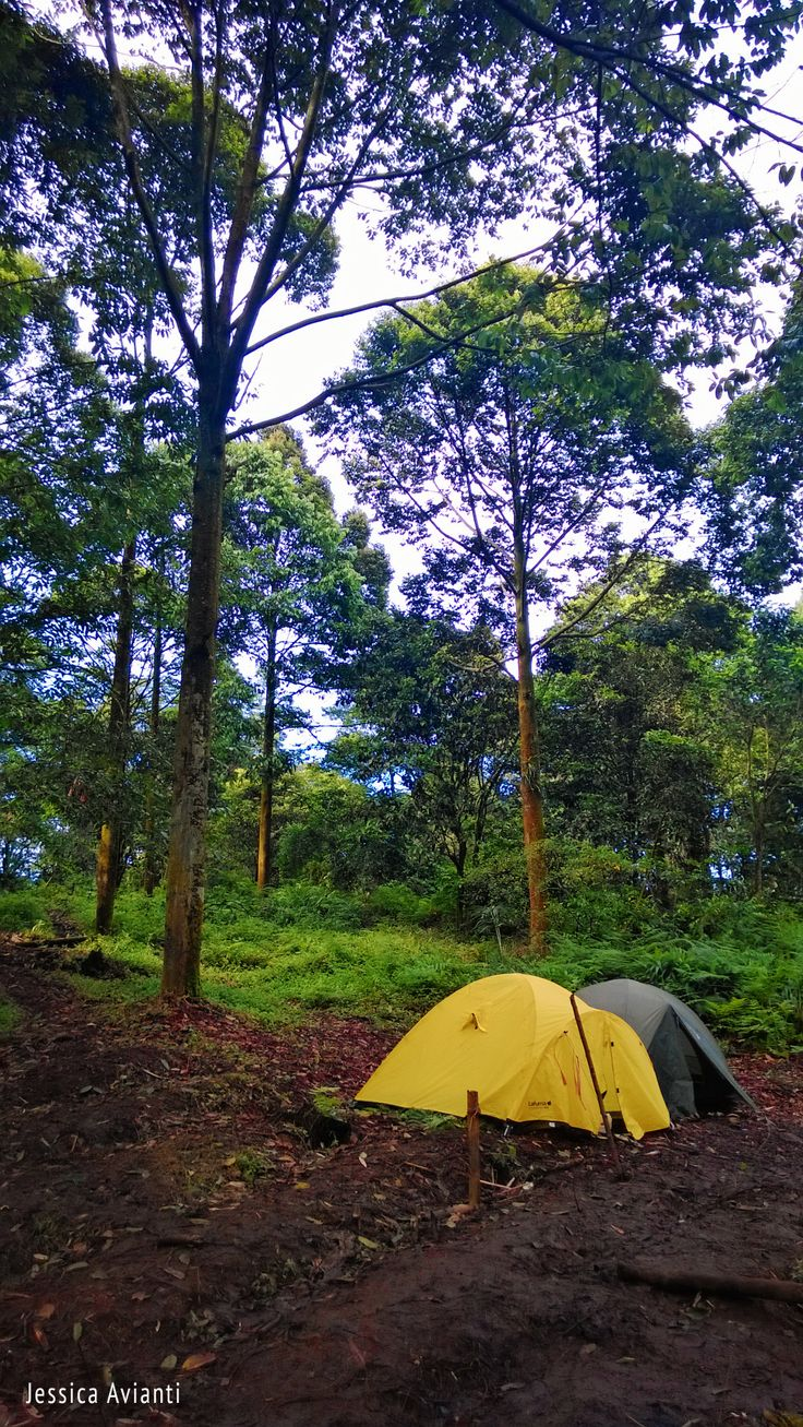 Kaki Gunung Salak, Indonesia #Lumia 920 Camera