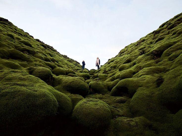 """14 """"Извержение мха"""". Автор - Dylan Shaw. Вулканическая порода, поросшая мхом (Исландия)."""