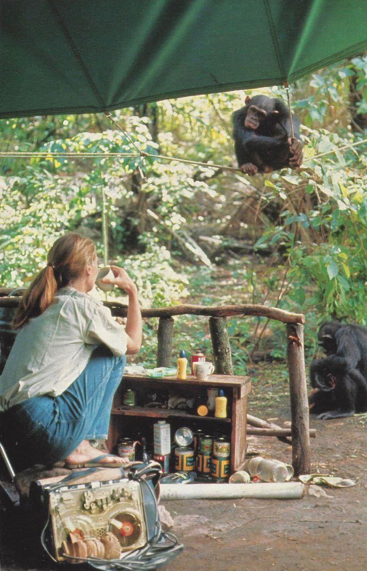 vintagenatgeographic:  Jane Goodall, National Geographic