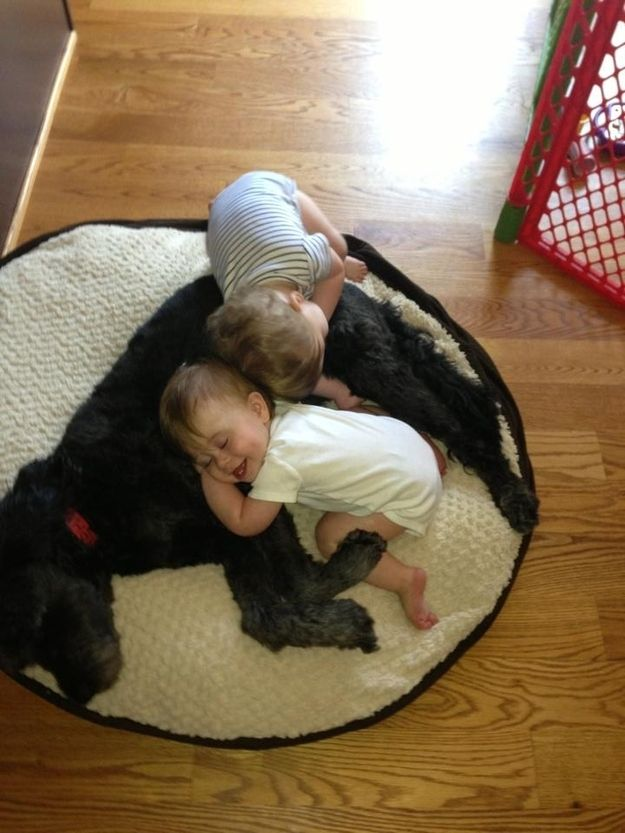 They are fantastic nap time pals. | 41 Ways Your Dog Makes Your Life 100% Better