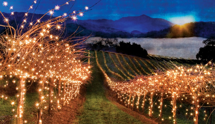 Vineyard Lights, photo by Michael Regnier.  Wow.  Salud!