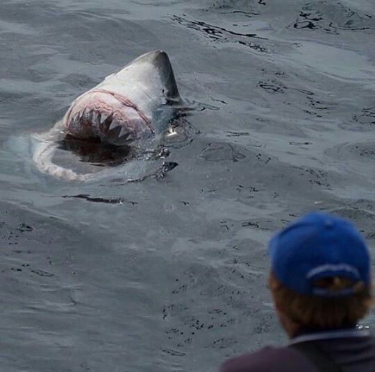 The great white shark! Showing the power!