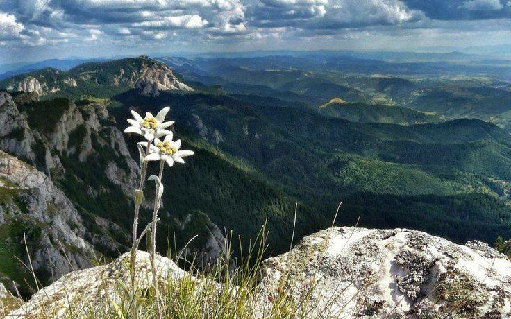 Hasmas Mountains -Romania