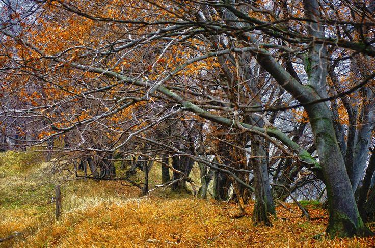 Autumn in Biertan Village, Transylvania, Romania