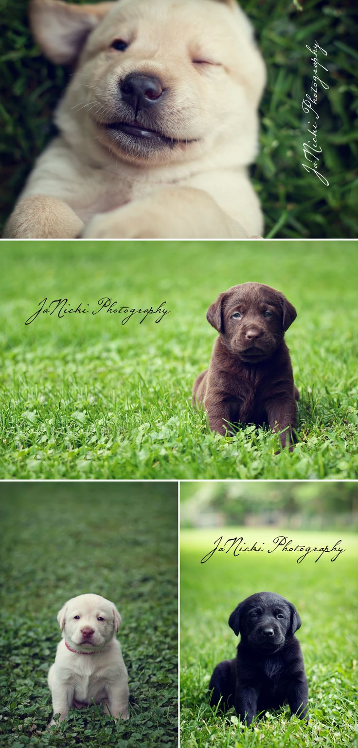 49 best Puppy photoshoots images on Pinterest