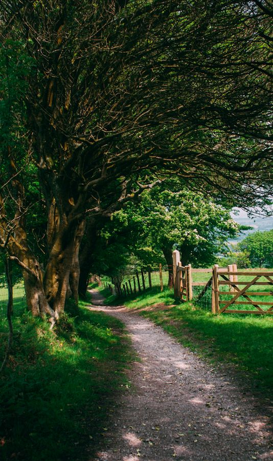 Shady country path in Wales,   • Fixeche Photography