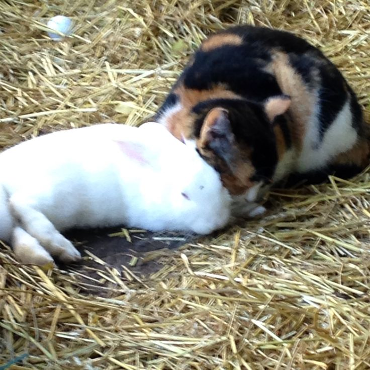 Bobbies first day outside so Tina joins her NZ white rabbit