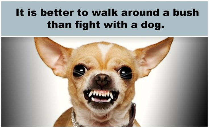 Turkish proverb - Translation: It's best to go out of your way to avoid conflict