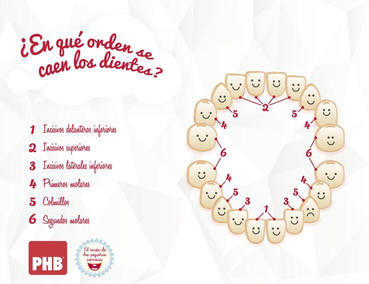 M s de 20 ideas incre bles sobre imagen dental en for Suelo que se me caen los dientes