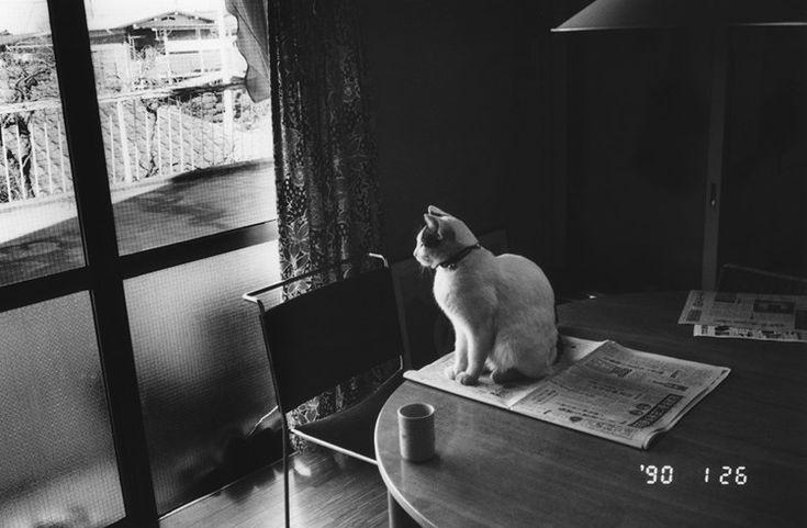 Nobuyoshi Araki. Sentimental Journey, Winter Journey, 1971-1990/2005