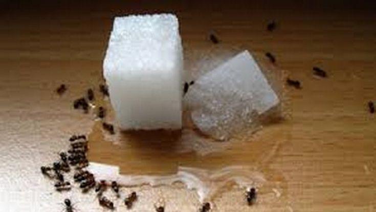 Ecco tutti i rimedi naturali per allontanare le formiche da casa..e dalla cucina