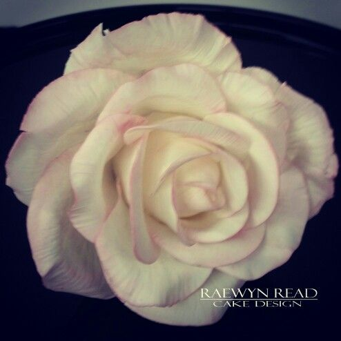 Sugar Rose www.facebook.com/cakesbyraewyn  #sugarflowers #sugarflowerclasses #sugarrose