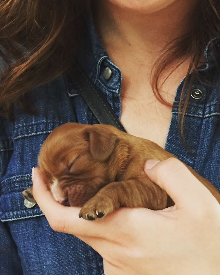 Download Charles Spaniel Brown Adorable Dog - 8c683a301e4c00c1c1833a1e88a978bd--king-charles-spaniels-cavalier-king-charles  Best Photo Reference_431462  .jpg