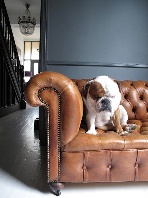 sofa dog wall color chanderlier = perfection