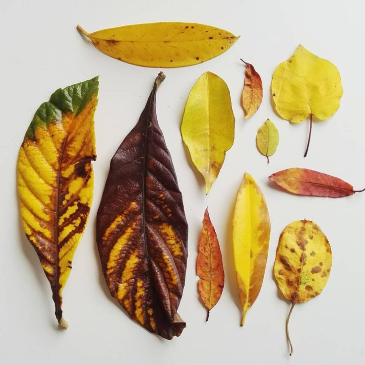 """41 Gostos, 4 Comentários - Adriana Oliveira (@mundoflo) no Instagram: """"Autumn from my parents backyard #fallenleaves #fall #autumncolors #collections #collectingnature…"""""""