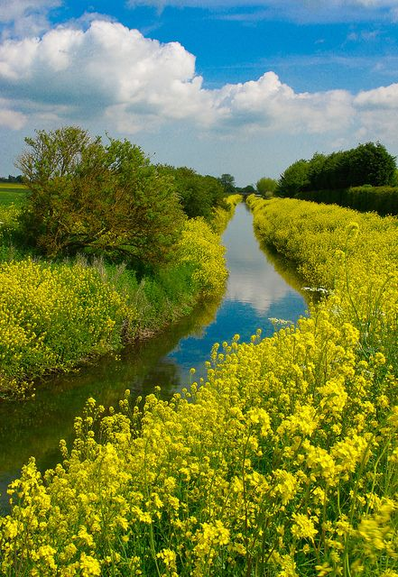 Louth Canal walk in Lincolnshire, England (by CLIFFWALKER).