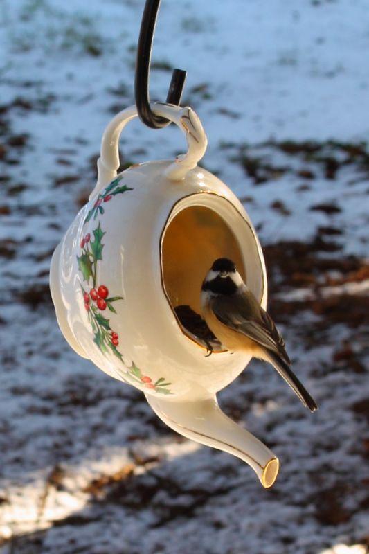 Teapot used for bird feeder