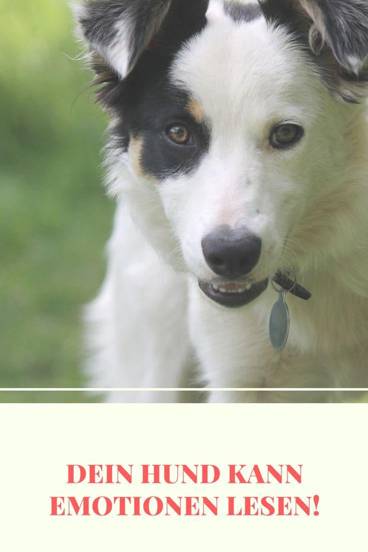 Dein Hund kann Emotionen lesen