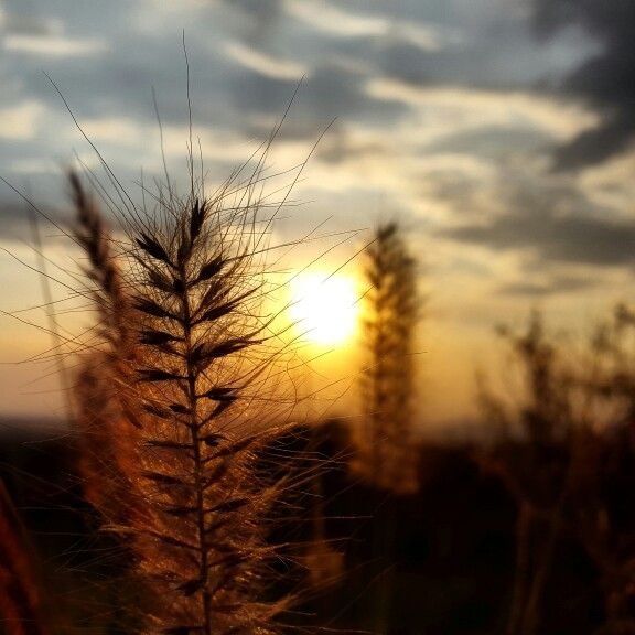 Sunset Highveld Sky