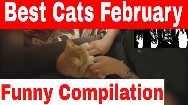 Funny Cats Best Of February 2017