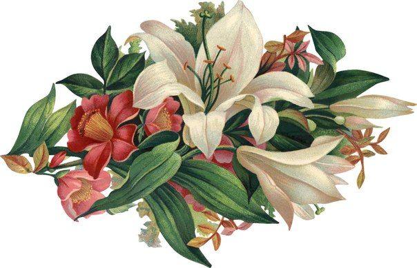 Эскиз татуировки - лилия и другие цветы