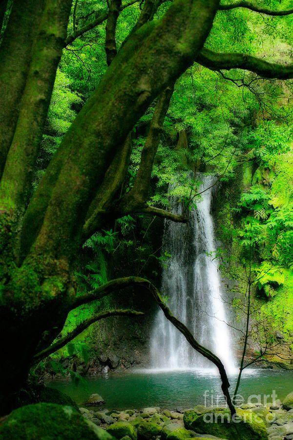 ✯ The Salto do Prego Waterfall, near the village of Faial da Terra - Sao Miguel Island, Azores Islands, Portugal
