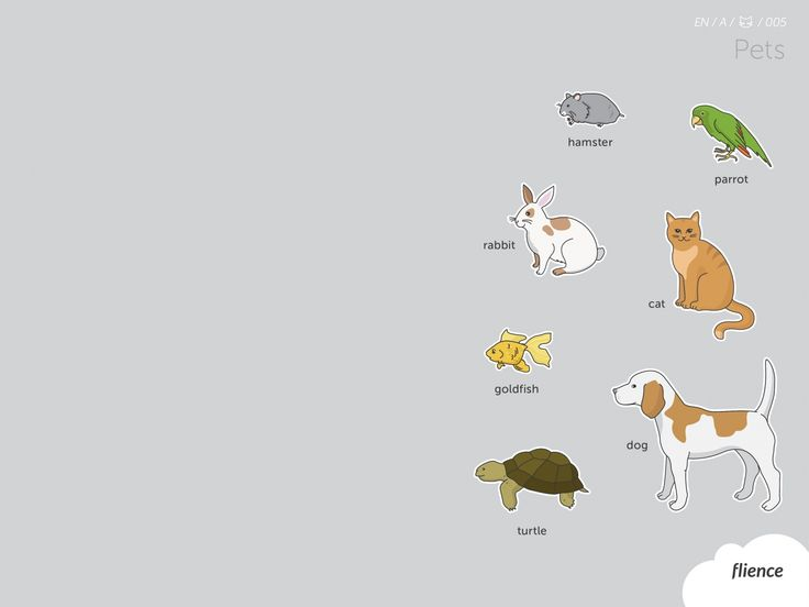 Animals-pets_005_en #ScreenFly #flience #english #education #wallpaper #language