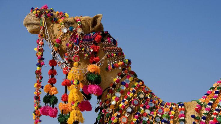 camel : High Definition Background 3840x2160