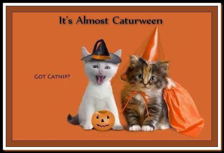 Caturween: