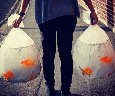Goldfish bowl trash bags! (Click for price)