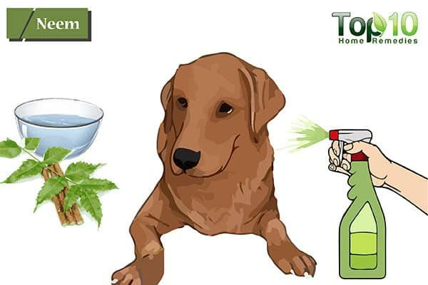 Home Remedies For Hot Spots On Dogs Dog Allergies Dog Hot Spots