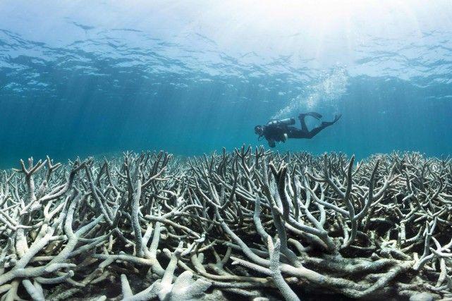 Environnement: Le blanchissement des coraux se poursuit en Nouvelle-Calédonie - Frawsy