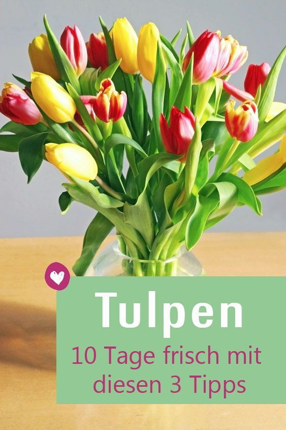 Tulpen in der Vase: Mit diesen Tipps halten sie länger
