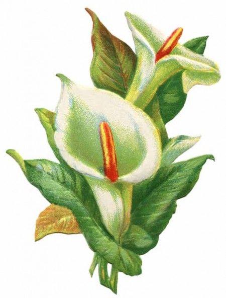 free easter flower clip art - photo #37