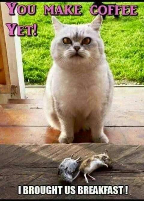 8c6cd83e2381ee7e53d15d162120c7d8 11050 best the best cat page images on pinterest kitty cats, cat,Cat Lover Meme